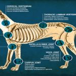 Canine Anatomy and Physiology - Online Curse