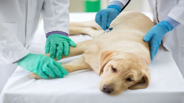 Canine Pathology & Diseases, Online Course